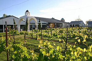 HAAK Vineyard