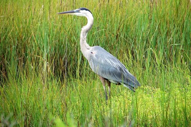 birding in pearland