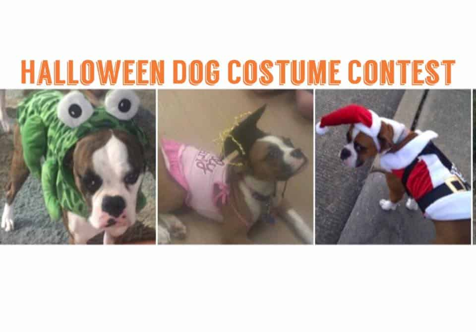 2nd annual dog halloween costume contest at vallensons brewing company pearland texas convention visitors bureau