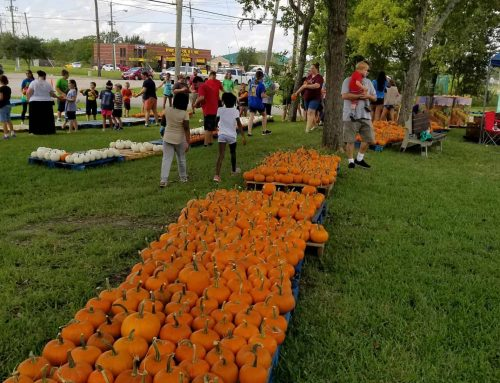 St. Andrew's 20th Annual Pumpkin Patch in Pearland